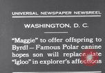 Image of polar canine bitch Washington DC USA, 1931, second 2 stock footage video 65675026602