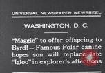 Image of polar canine bitch Washington DC USA, 1931, second 3 stock footage video 65675026602