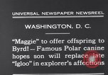 Image of polar canine bitch Washington DC USA, 1931, second 5 stock footage video 65675026602