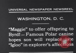 Image of polar canine bitch Washington DC USA, 1931, second 7 stock footage video 65675026602