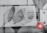 Image of tobacco leaves Norway, 1941, second 7 stock footage video 65675026794