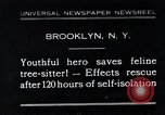 Image of cat rescued by a young man Brooklyn New York City USA, 1930, second 1 stock footage video 65675026886