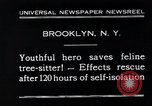 Image of cat rescued by a young man Brooklyn New York City USA, 1930, second 3 stock footage video 65675026886
