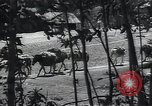 Image of Ethiopians prepare for war with Italy Ethiopia, 1935, second 9 stock footage video 65675027061