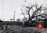 Image of fruit trees cut down France, 1917, second 6 stock footage video 65675027247