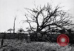 Image of fruit trees cut down France, 1917, second 7 stock footage video 65675027247