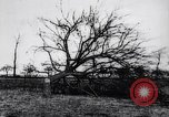Image of fruit trees cut down France, 1917, second 8 stock footage video 65675027247