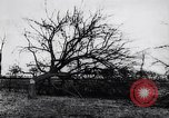 Image of fruit trees cut down France, 1917, second 9 stock footage video 65675027247