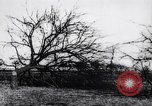 Image of fruit trees cut down France, 1917, second 10 stock footage video 65675027247