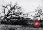 Image of fruit trees cut down France, 1917, second 11 stock footage video 65675027247