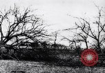 Image of fruit trees cut down France, 1917, second 12 stock footage video 65675027247
