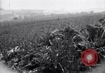 Image of Area in France unscathed by war Picardy France, 1918, second 11 stock footage video 65675027490