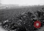 Image of Area in France unscathed by war Picardy France, 1918, second 12 stock footage video 65675027490
