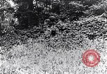 Image of Renault FT-17 Light Tank France, 1918, second 5 stock footage video 65675027506