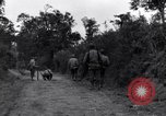 Image of 29th Division soldiers look for landmines Saint Lo France, 1944, second 4 stock footage video 65675027650