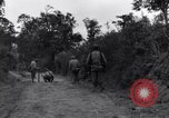 Image of 29th Division soldiers look for landmines Saint Lo France, 1944, second 5 stock footage video 65675027650