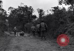 Image of 29th Division soldiers look for landmines Saint Lo France, 1944, second 7 stock footage video 65675027650