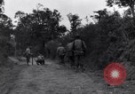 Image of 29th Division soldiers look for landmines Saint Lo France, 1944, second 8 stock footage video 65675027650