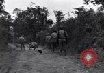 Image of 29th Division soldiers look for landmines Saint Lo France, 1944, second 11 stock footage video 65675027650