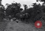 Image of 29th Division soldiers look for landmines Saint Lo France, 1944, second 12 stock footage video 65675027650