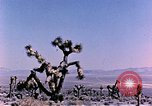 Image of Atomic Test Grable Nevada United States USA, 1953, second 2 stock footage video 65675027692