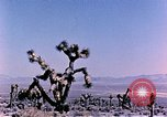 Image of Atomic Test Grable Nevada United States USA, 1953, second 3 stock footage video 65675027692