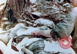 Image of Wounded marine Saipan Northern Mariana Islands, 1944, second 5 stock footage video 65675028050