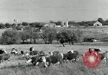 Image of cattle ranches Texas United States USA, 1942, second 4 stock footage video 65675028175