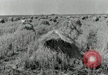 Image of rice farm Texas United States USA, 1942, second 1 stock footage video 65675028176