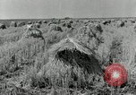 Image of rice farm Texas United States USA, 1942, second 2 stock footage video 65675028176