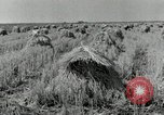 Image of rice farm Texas United States USA, 1942, second 3 stock footage video 65675028176