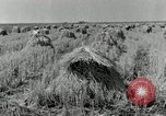 Image of rice farm Texas United States USA, 1942, second 4 stock footage video 65675028176
