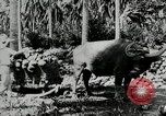 Image of men Philippines, 1936, second 5 stock footage video 65675028187