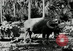 Image of men Philippines, 1936, second 7 stock footage video 65675028187