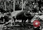 Image of men Philippines, 1936, second 8 stock footage video 65675028187