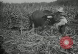 Image of man Philippines, 1936, second 2 stock footage video 65675028188
