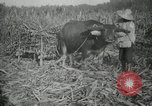 Image of man Philippines, 1936, second 3 stock footage video 65675028188