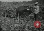 Image of man Philippines, 1936, second 4 stock footage video 65675028188