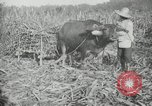 Image of man Philippines, 1936, second 5 stock footage video 65675028188