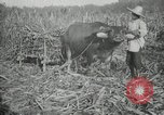 Image of man Philippines, 1936, second 6 stock footage video 65675028188