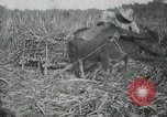 Image of man Philippines, 1936, second 7 stock footage video 65675028188