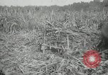 Image of man Philippines, 1936, second 9 stock footage video 65675028188