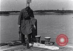 Image of marine borer Edgewood Arsenal Maryland USA, 1930, second 1 stock footage video 65675028369
