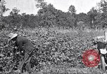 Image of inspecting crop United States USA, 1921, second 10 stock footage video 65675028387
