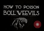 Image of poisoning Boll Weevils United States USA, 1921, second 10 stock footage video 65675028395