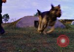 Image of K-9 sentry dogs Phu Cat Air Base Vietnam, 1969, second 8 stock footage video 65675028490