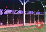 Image of K-9 sentry dogs Phu Cat Air Base Vietnam, 1969, second 1 stock footage video 65675028491