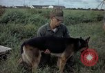 Image of sentry dog examined Tan Son Nhut Air Force Base Vietnam, 1965, second 4 stock footage video 65675028502