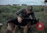 Image of sentry dog examined Tan Son Nhut Air Force Base Vietnam, 1965, second 5 stock footage video 65675028502
