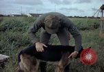 Image of sentry dog examined Tan Son Nhut Air Force Base Vietnam, 1965, second 6 stock footage video 65675028502